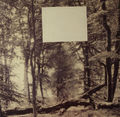Valerios Caloutsis, Forest 2, Naturmatic series, Paris 1976, photograph on wood